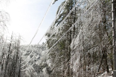 Trees and electrical wires with ice on them